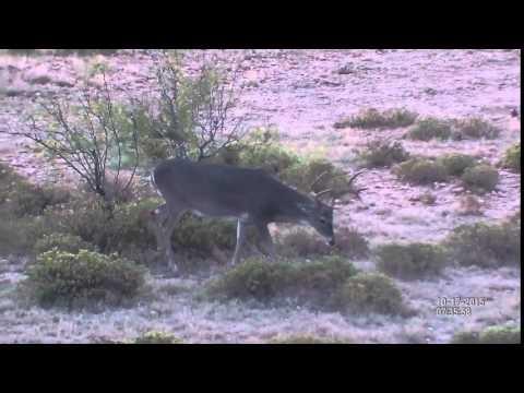 Deer Observation | ATN BinoX- HD digital binoculars with Full HD camera