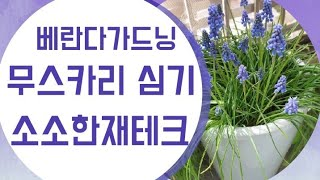 무스카리심기/소소한재테크/베란다가드닝