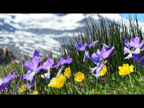 """Peaceful Relaxing music, Meditation and Calm Instrumental Music """"Mountain Wonder"""" by Tim Janis"""