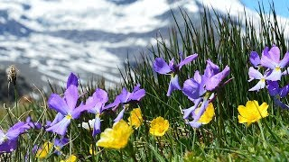 Peaceful Relaxing music, Meditation and Calm Instrumental Music ...