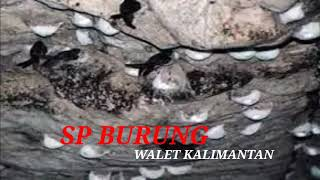 Download Mp3 Suara Walet Panggil | Sp Walet Liar | Info Walet