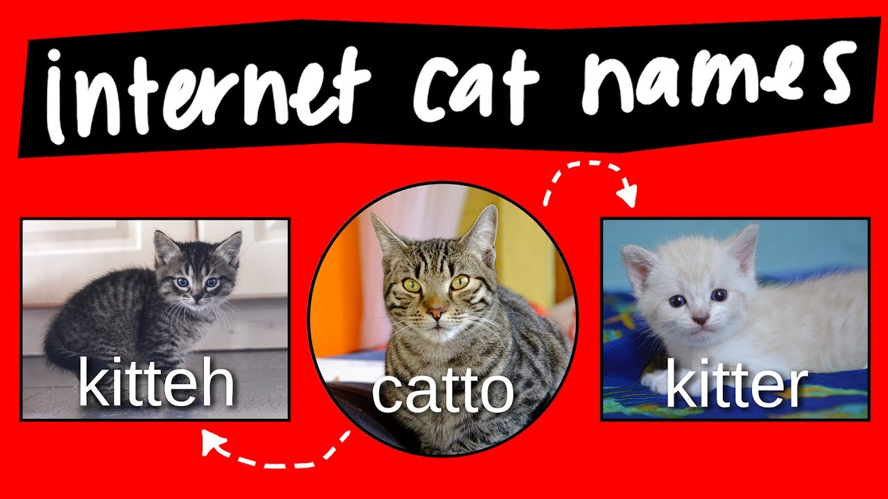 kitteh kitter and catto internet names for cats [ 1280 x 720 Pixel ]