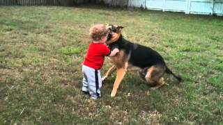 Baby Grandson, Ari Playing With Max (our German Shepherd).