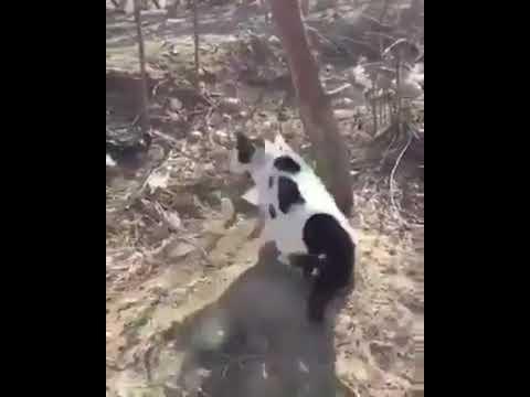 Cat gang vs dog !