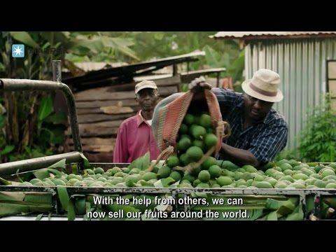 Maersk in Kenya and avocado trade