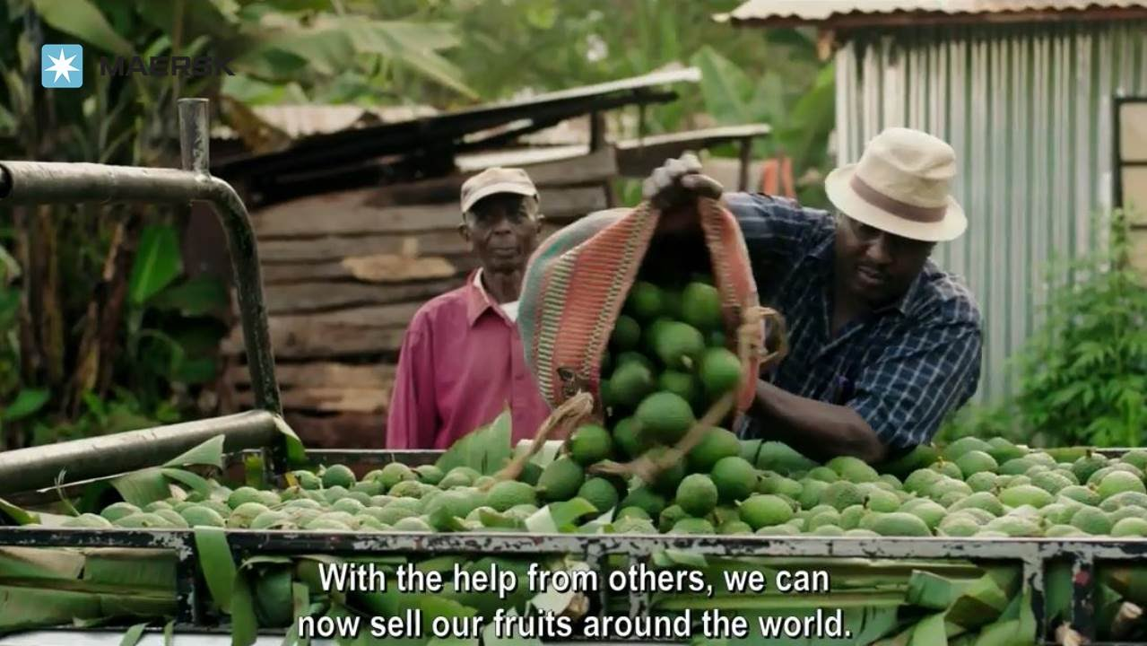 Image result for avocado farming in kenya