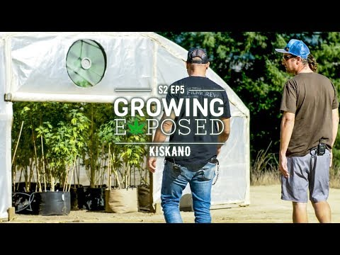 GROWING EXPOSED SEASON 2 EPISODE 5: Kiskanu