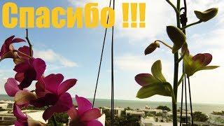 СПАСИБО ВСЕМ за поддержку! Тайфун прошел! ВСЕМ МИРА и ДОБРА!