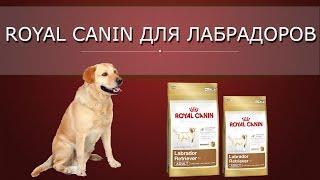 Роял канин (Royal Canin ) для собак лабрадоров