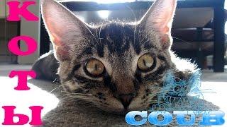 COUB приколы с животными - прикольные кошки и котята #2 / COUB best funny cats and kittens