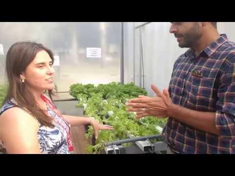 House of Switzerland Food Security - Daniel Urban Farmers