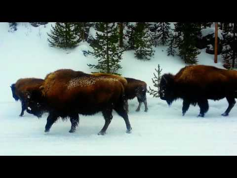 2014 Yellowstone Snowmobile Tour to Old Faithful