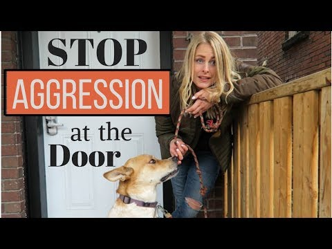 How to Enter the HOME of an 'AGGRESSIVE DOG' (for dog walker