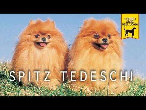 SPITZ TEDESCO trailer documenario (Pomerania)