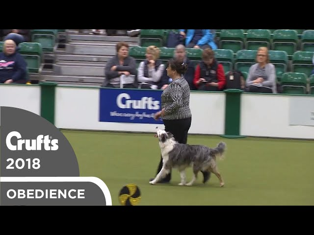 Obedience - Dog Championship - Part 4 | Crufts 2018