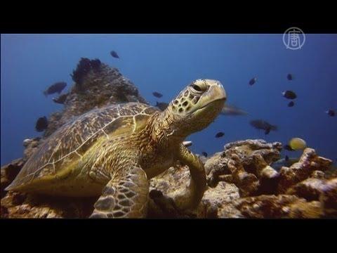Путешествие по Барьерному рифу новости