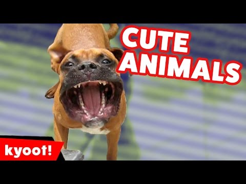 The Funniest Cute Pets & Animal Videos Monthly Compilation October 2016 | Kyoot Animals