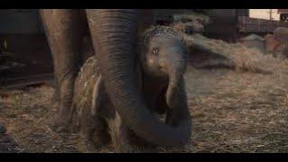 ช้างจัมโบ้ในชีวิตจริง ช่างน่าสงสารไม่ได้งดงามเหมือนในการ์ตูน