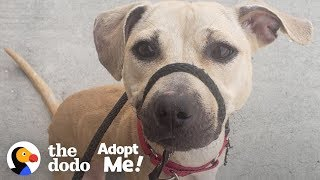 Dog Who Grew Up On A Chain Is Still A Puppy Inside A Big Dog's Body | The Dodo Adopt Me!