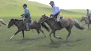 どこまでも続く、モンゴルの草原で、思い切り乗馬を楽しんで頂いてます...