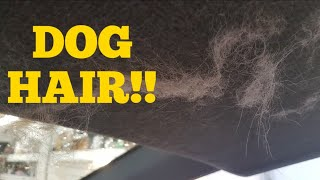 Quick car detailing tips #5. Remove dog hair the easy way.