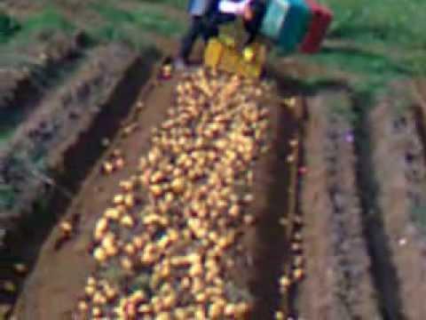 Scavapatate economico doovi for Di raimondo macchine agricole