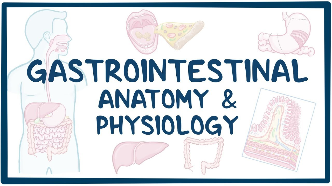 Gastrointestinal Anatomy and Physiology - YouTube