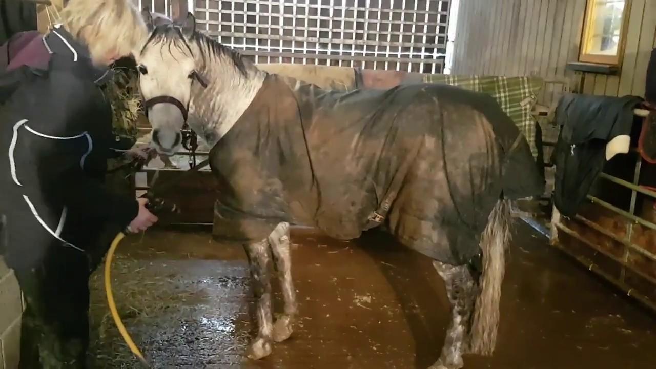 Clippersharp Hot Horse Shower