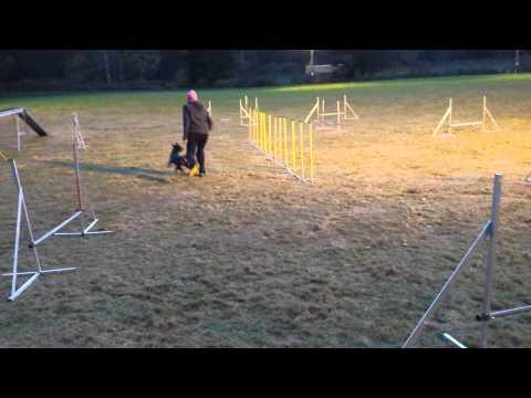 Lilja agilityträning 2013-10-18