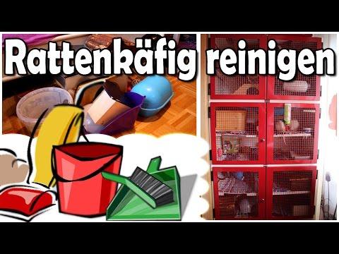 Rattenkäfig reinigen/Gehege Säuberung