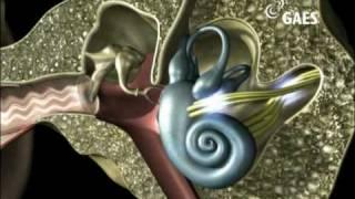 Un viaje al interior del oido