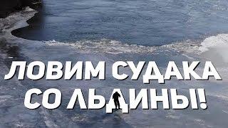 РАЗДАЧА СУДАКА по последнему льду! Рыбалка в Астрахани. Зима, февраль.