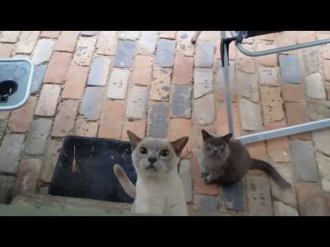 Cute cats - Can I come in?