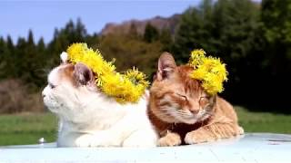 http://ameblo.jp/nosenekoshiro/entry-12272111642.html のせ猫オフィ...