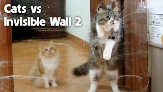 3 Cats vs Invisible Wall - Challenge 2: Go through the Wall