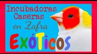 Aves exóticas. Feria del ganado de  Zafra 18.