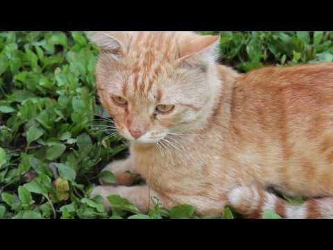 meowing-cat-videos-–-meow-cat-video-–-kitten-&-cat-meowing-happy-–-cats-meow-kittens-meowing-sound