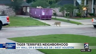 Tiger spotted on front lawn of home in Fleetwood neighborhood
