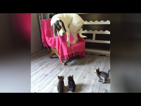OLD CATS & DOGS can be SUPER FUNNY TOO! – TRY NOT TO LAUGH
