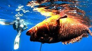 spearfishing adventures 16: GROUPER-STORM