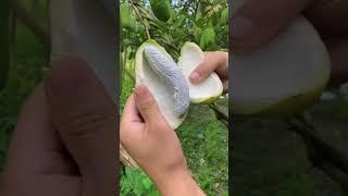 Farm Fresh Ninja Frขit   Tik Tok China   (Oddly Satisfying Fruit Ninja)
