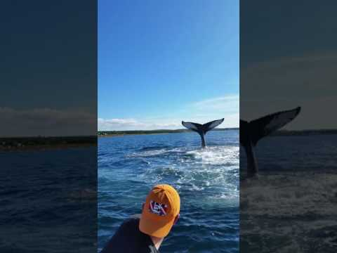 Whale Tail in Conception Bay South