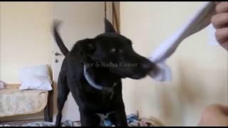 Разговаривающая собака съела носок