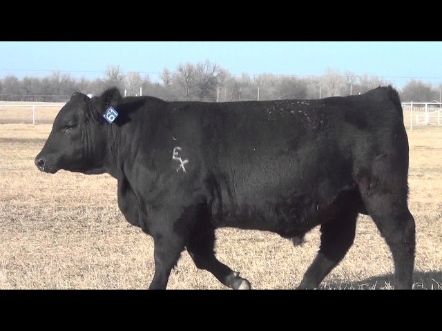 Express Ranches Lot 61