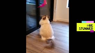 | Cats are so funny | Funny cats and Kittens | Funny cats compilation |