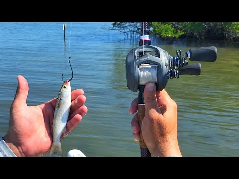 Fishing Live Finger Mullet To Figure Out New Water