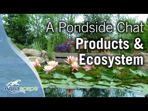 A Pondside Chat - Aquascape Products and the Ecosystem