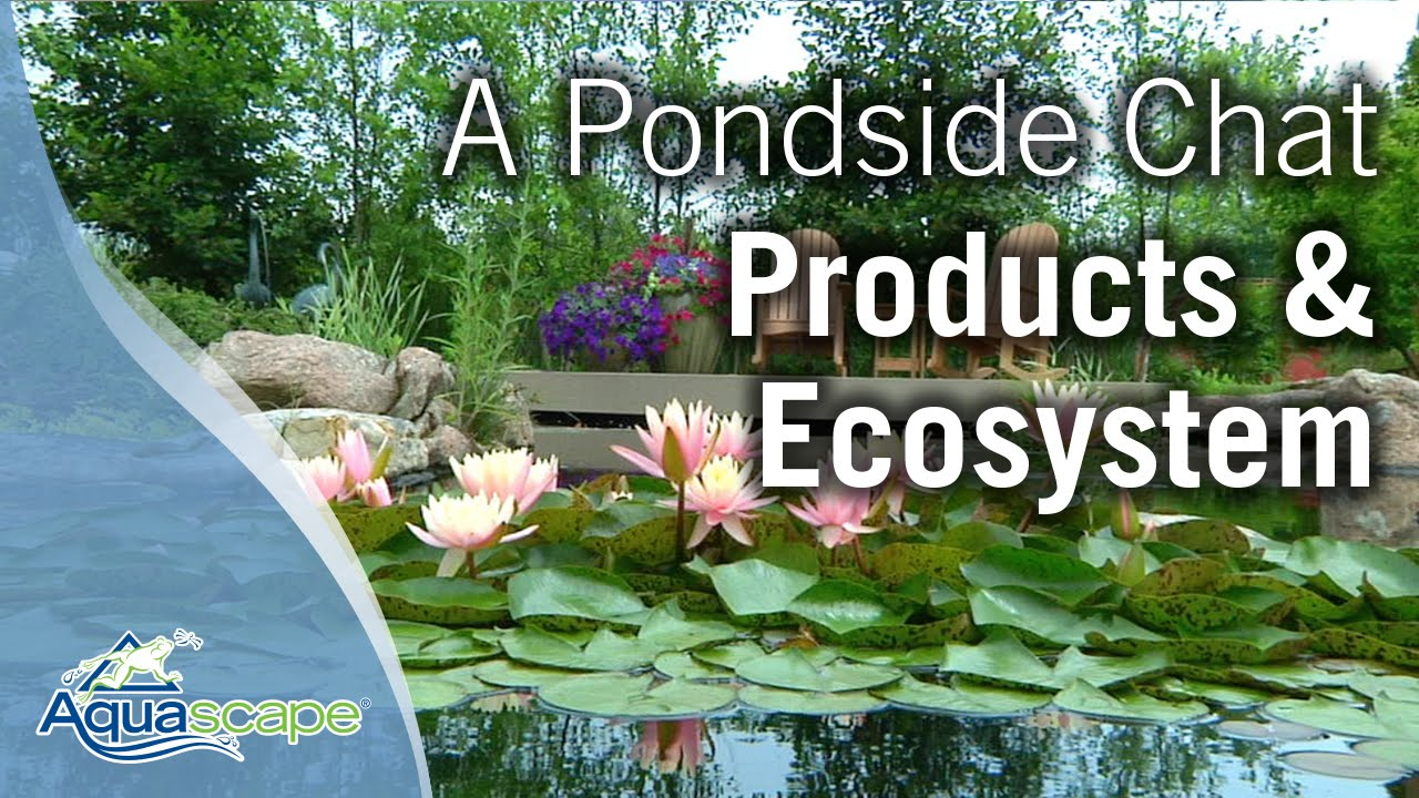 Aquascape Ecosystem - Aquascape Ideas