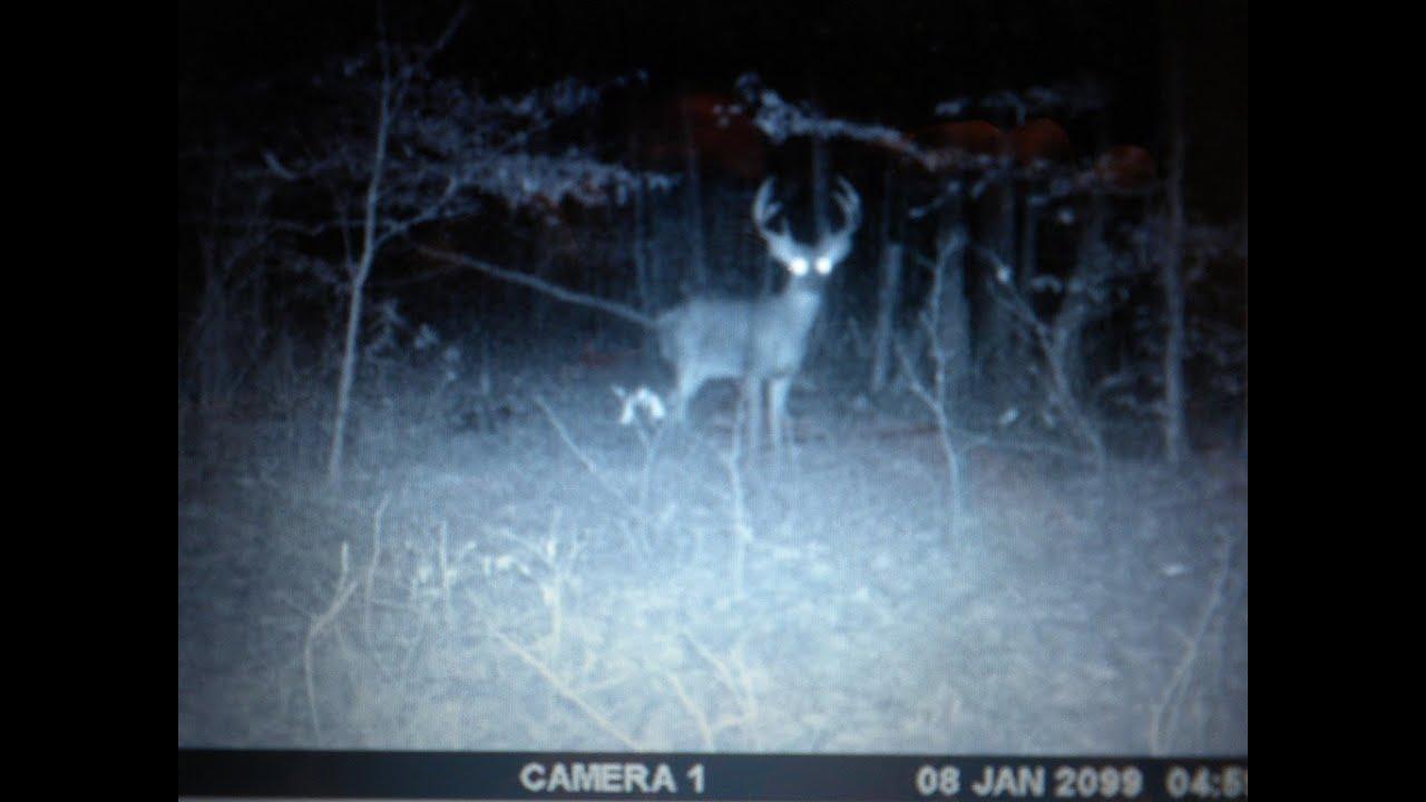 Moultrie Deer Pics