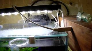 Светодиодный светильник для аквариума своими руками!